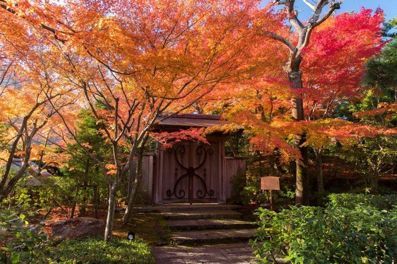 茶の庭紅葉