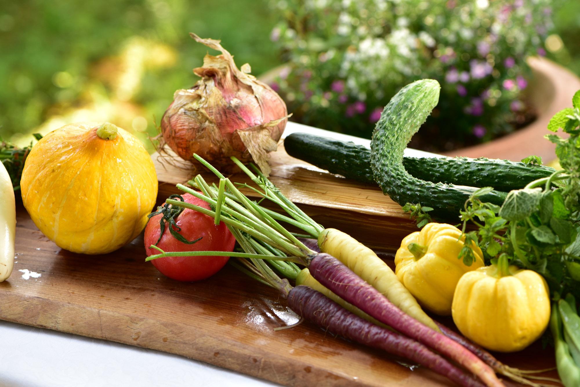 8月19日(土)「畑の収穫美食会」のご案内